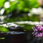 Healthy-Garden-Pond