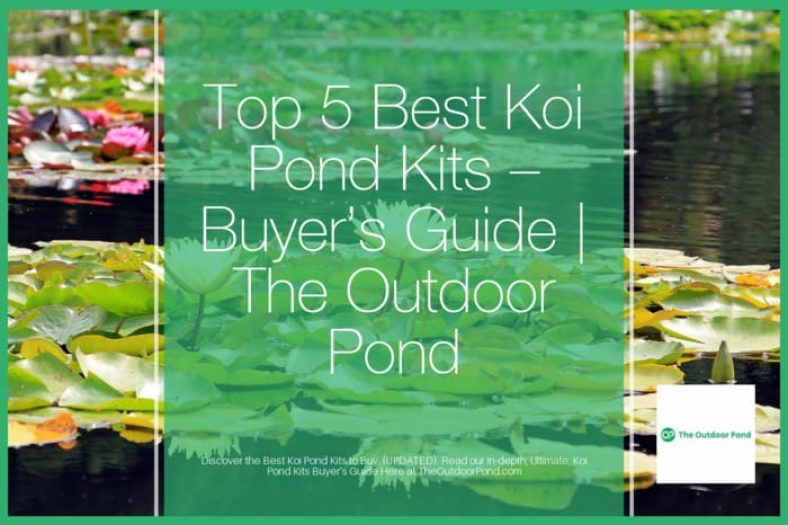 Top 5 Best Koi Pond Kits